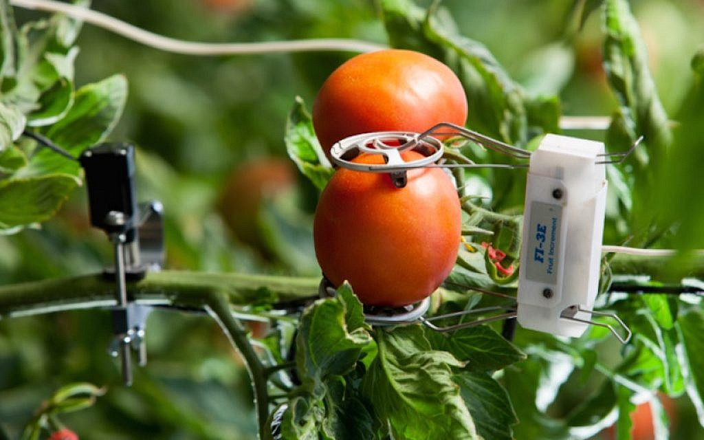 phytech iot for agritech